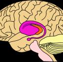 ¿Podemos saber ya cuándo un cerebro es un cerebro criminal?