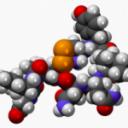 """La hormona nepotista. El así llamado """"lado oscuro"""" de la oxitocina"""