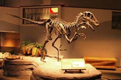 Un dinosaurio llamado gorrión